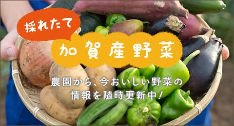 採れたて加賀野菜
